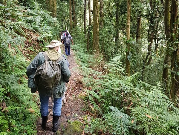 mountain hiking in nyungwe forest park